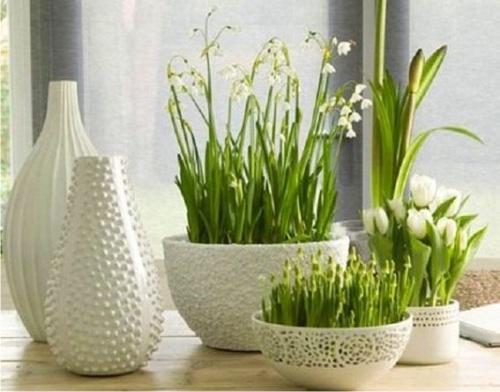 Photo of Некоторые комнатные растения способны защитить от гриппа