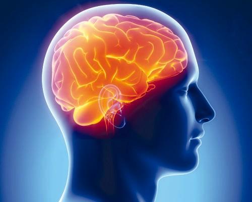 Photo of Эксперты назвали главные различия между двумя полушариями мозга
