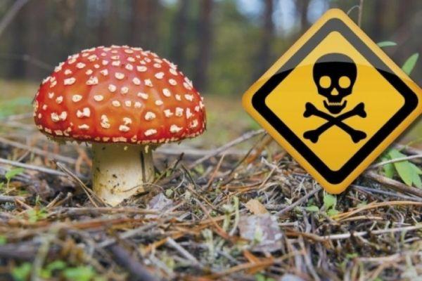 Photo of Отравление грибами: симптомы и признаки, через сколько проявляется, что делать
